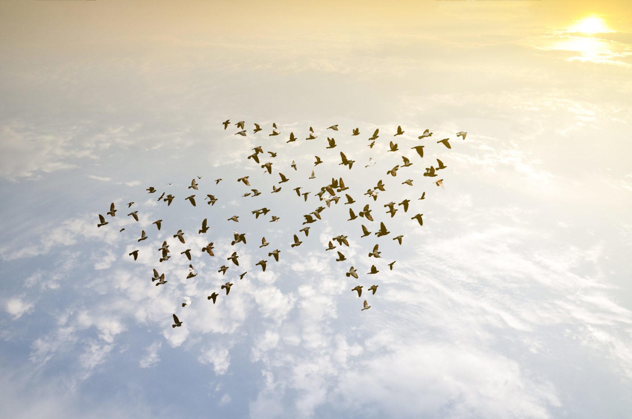 Arrow of birds